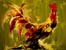 Thomas Easley's Rooster Paintings - Fowl Play Series